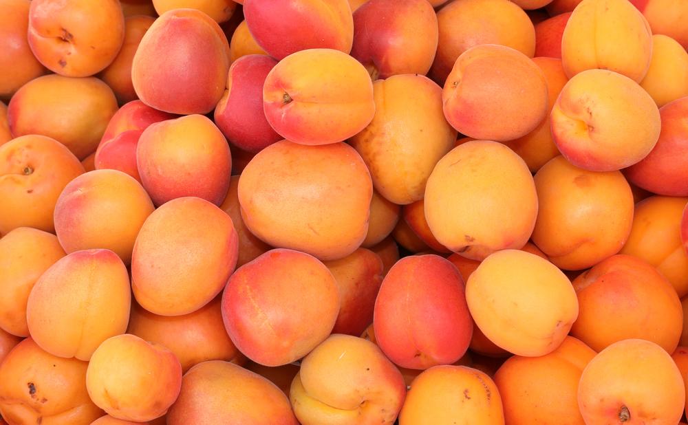 Abricot Français