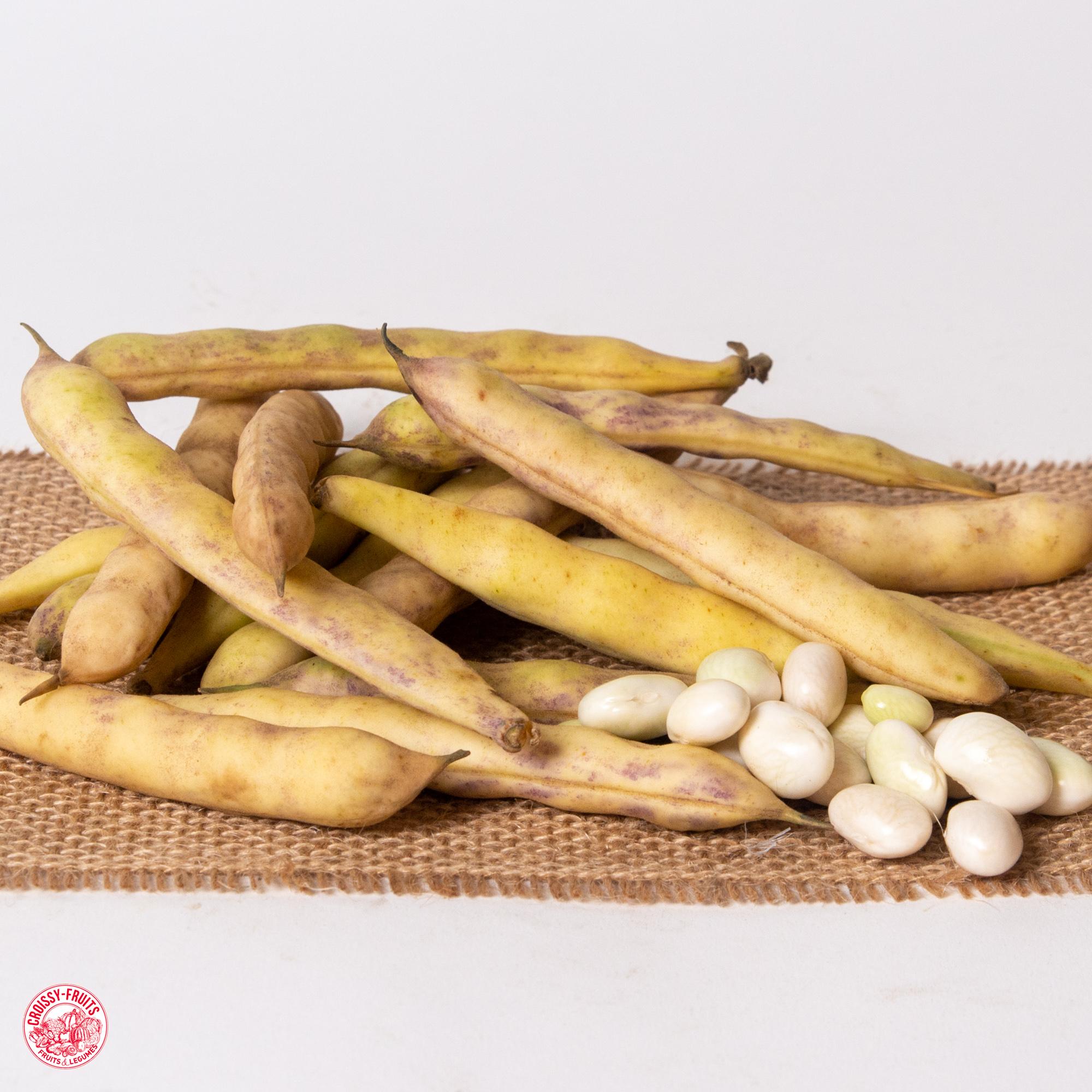 Coco de paimpol